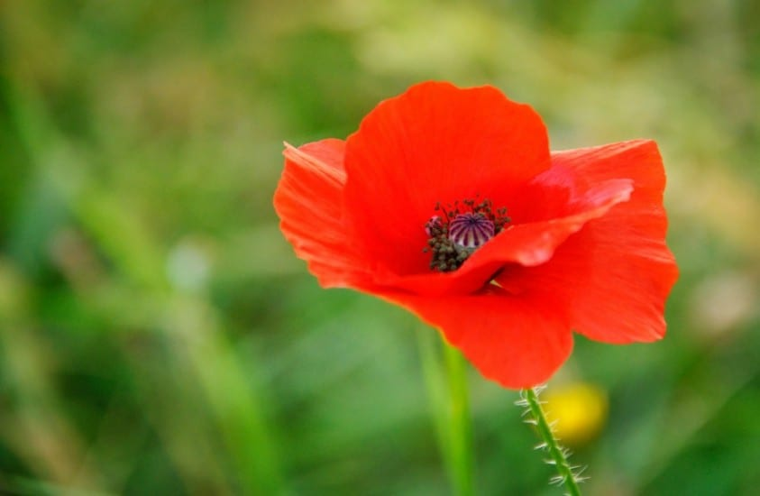 ANZAC Day 2016 – Lest We Forget
